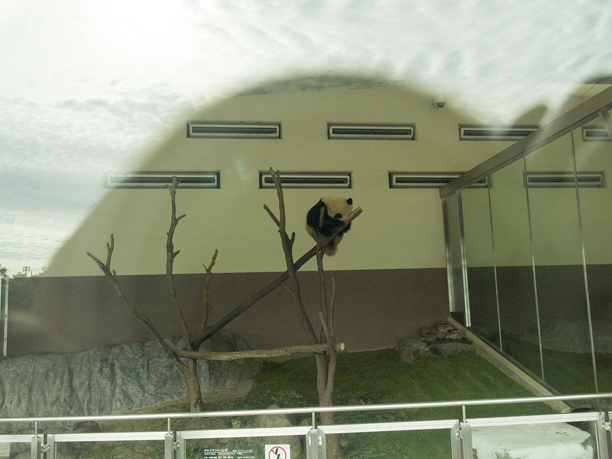 建物のガラスの向こうに、、あれは!!