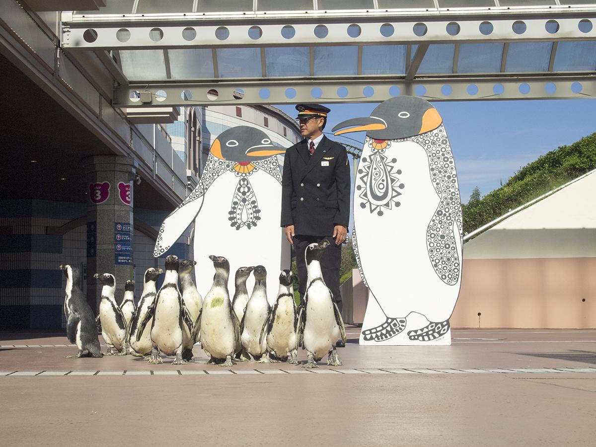 こちらではペンギンたちとの撮影。駅長もペンギンたちと近いポージング。